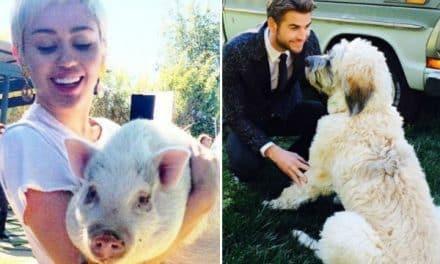 Miley y Liam acordaron la custodia de sus mascotas